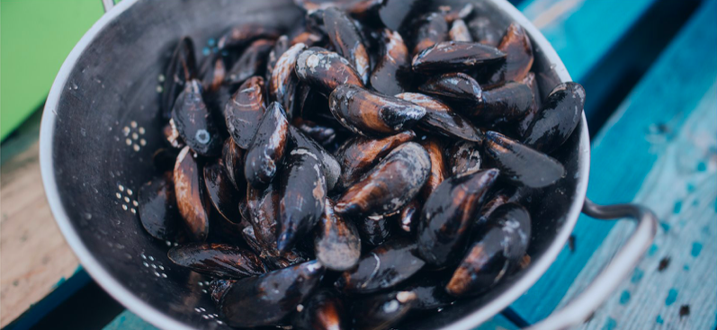 Mussel week with Ryba je ryba
